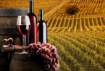 rosso conero vitigno